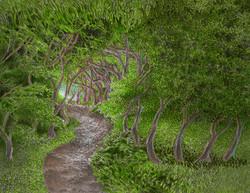Summer Path Through The Woods