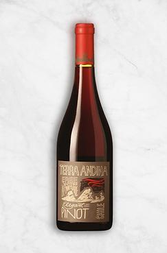 Terra Andina Lifestyle - Pinot Noir.png