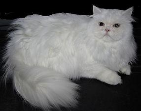 yoda adult cats (6)_LI.jpg