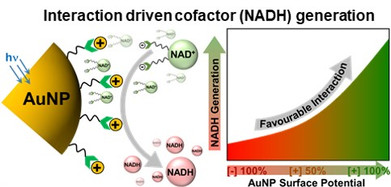 Electrostatically Driven Multielectron Transfer for the Photocatalytic Regeneration of Nicotinamide Cofactor
