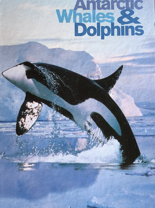 Antarctic Whales & Dolphins