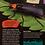 Thumbnail: Extraordinary Bugs
