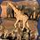 Thumbnail: Animal Sizes Level 9/10/11 (Red Rocket)