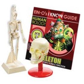 Ein-O Human Biology Skull & Skeleton Kit