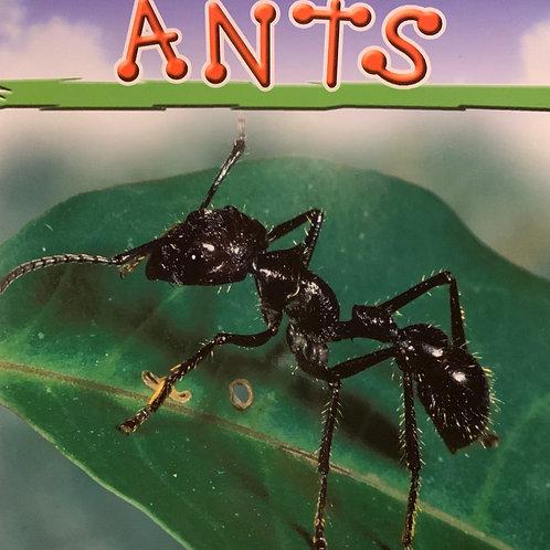 Ants Level 25 (MacMillan Take Home)