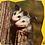 Thumbnail: Animal Homes Level 6 (Red Rocket)