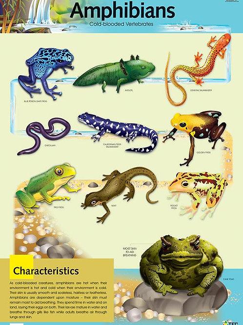 Amphibians Science Poster
