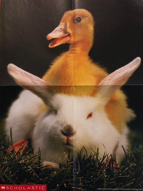 Duck/Rabbit Folded Poster