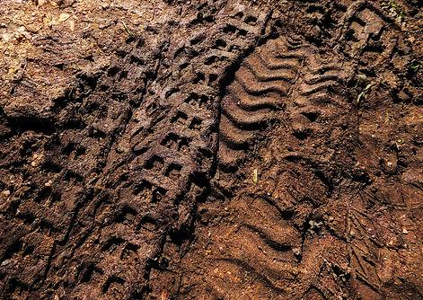 Muddy Tracks.jpeg