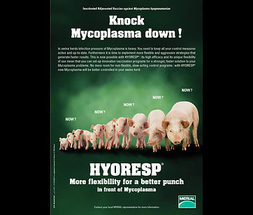 Annonce presse Hyoresp (Merial)