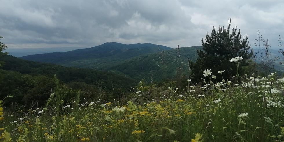 Пролетно почистване на Люлин планина