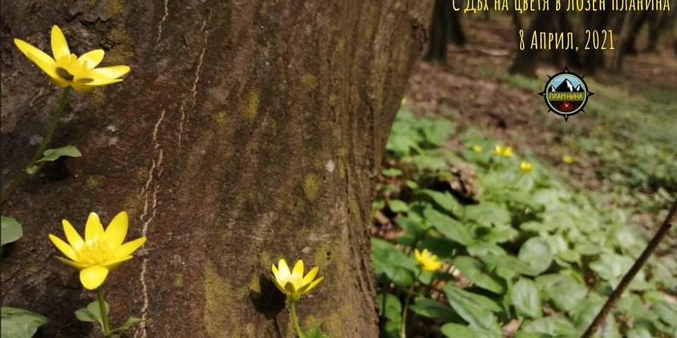 С дъх на цветя в Лозен планина