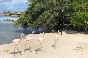 Renaissance Aruba Resort Private Island