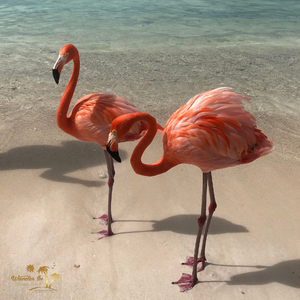 on Renaissance Aruba Resort Private Island