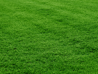 Experts Secrets to a Healthy Green Lawn