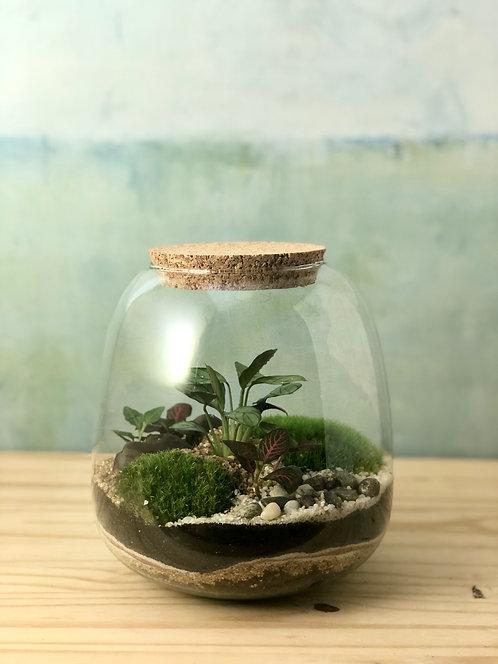 Terrarium /// MATTIM CREATIONS