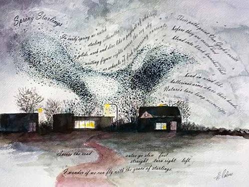 Spring Starlings