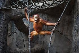zoo live streaming.jpg