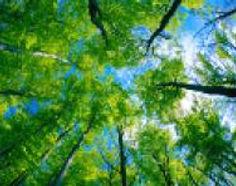 forest and woodland habitata.jpg