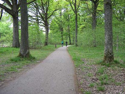 Piste cyclable en forêt
