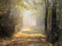 Forêt de Chambord dans la brume