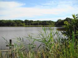 Vue d'un étang de Sologne