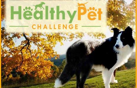 healthy pet.JPG 1.jpg