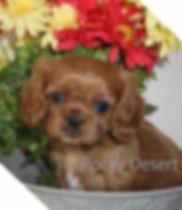 Sophie puppy1 copywrite.jpg