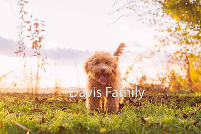 Olive with Davis Family 1.jpg