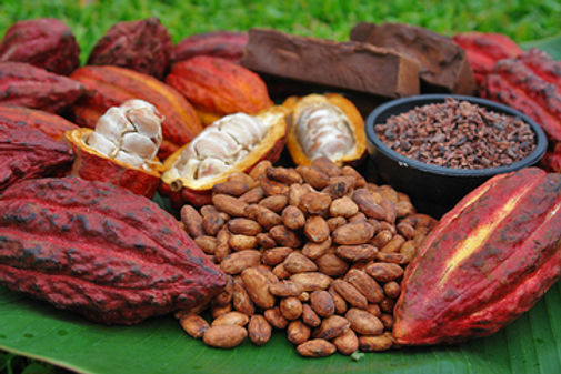 cacaopods.jpg