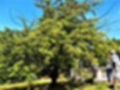 Abreuvoir, Garden