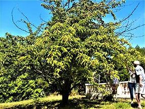 Abreuvoir - Bouilhonnac 310