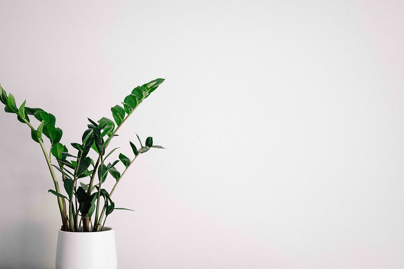 house-plant-with-white-pot.jpg