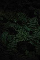 green ferns.jpg
