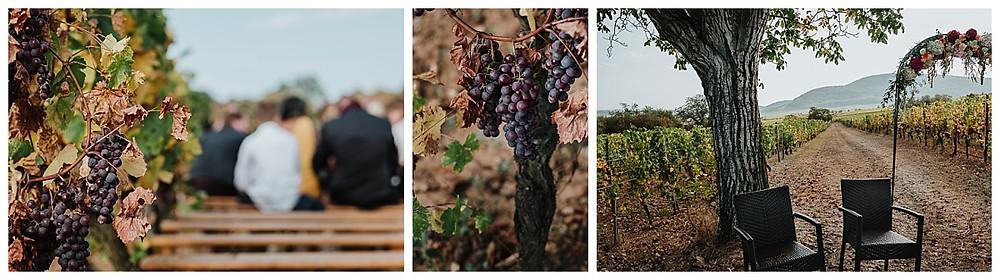 cérémonie laïque au milieu des vignes