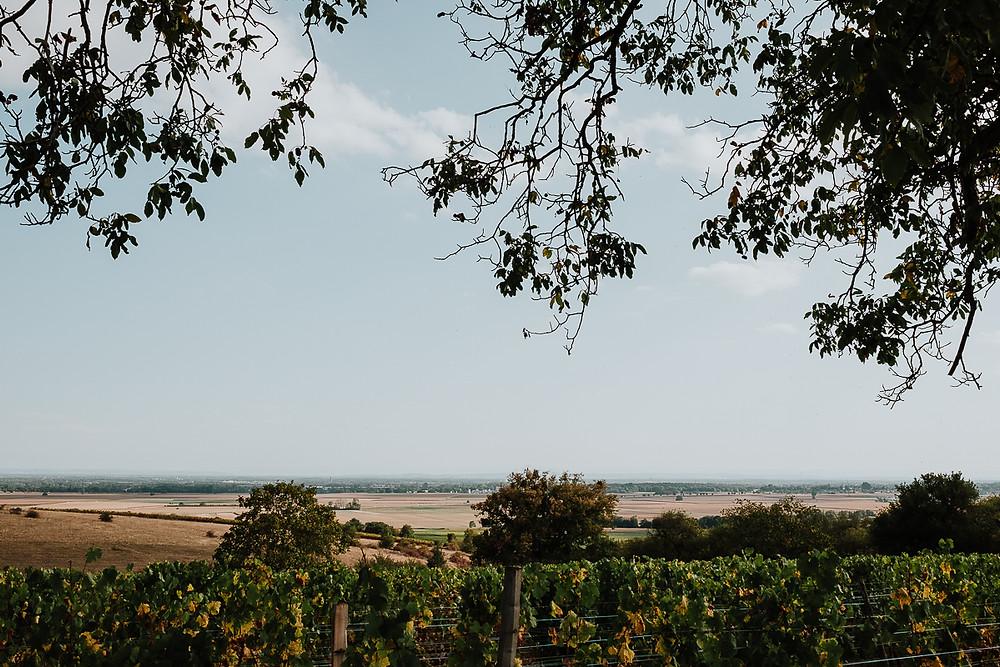 paysage vignoble alsacien