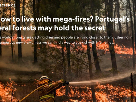CLIMATE REALITY: How to live with mega-fires? Portugal's feral forests may hold the secret