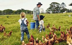 Dad Farmer Kids Chickens