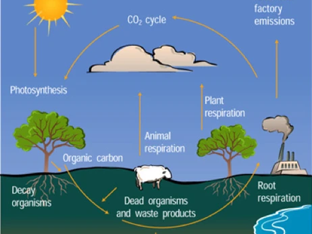 Cutting the CO2 from Human Generated Carbon