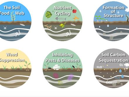 Animation Does A Great Job Explaining Soil Regenerative Practices!
