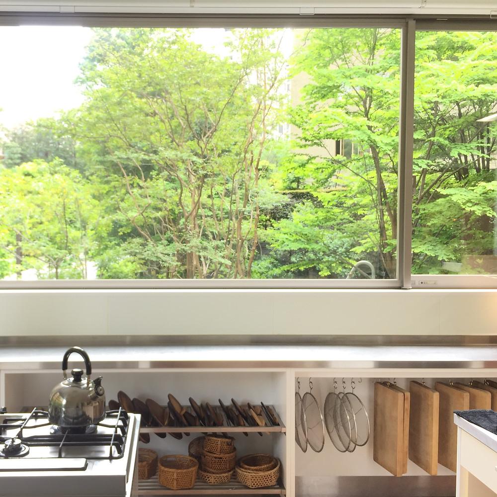 お教室の窓から見える新緑