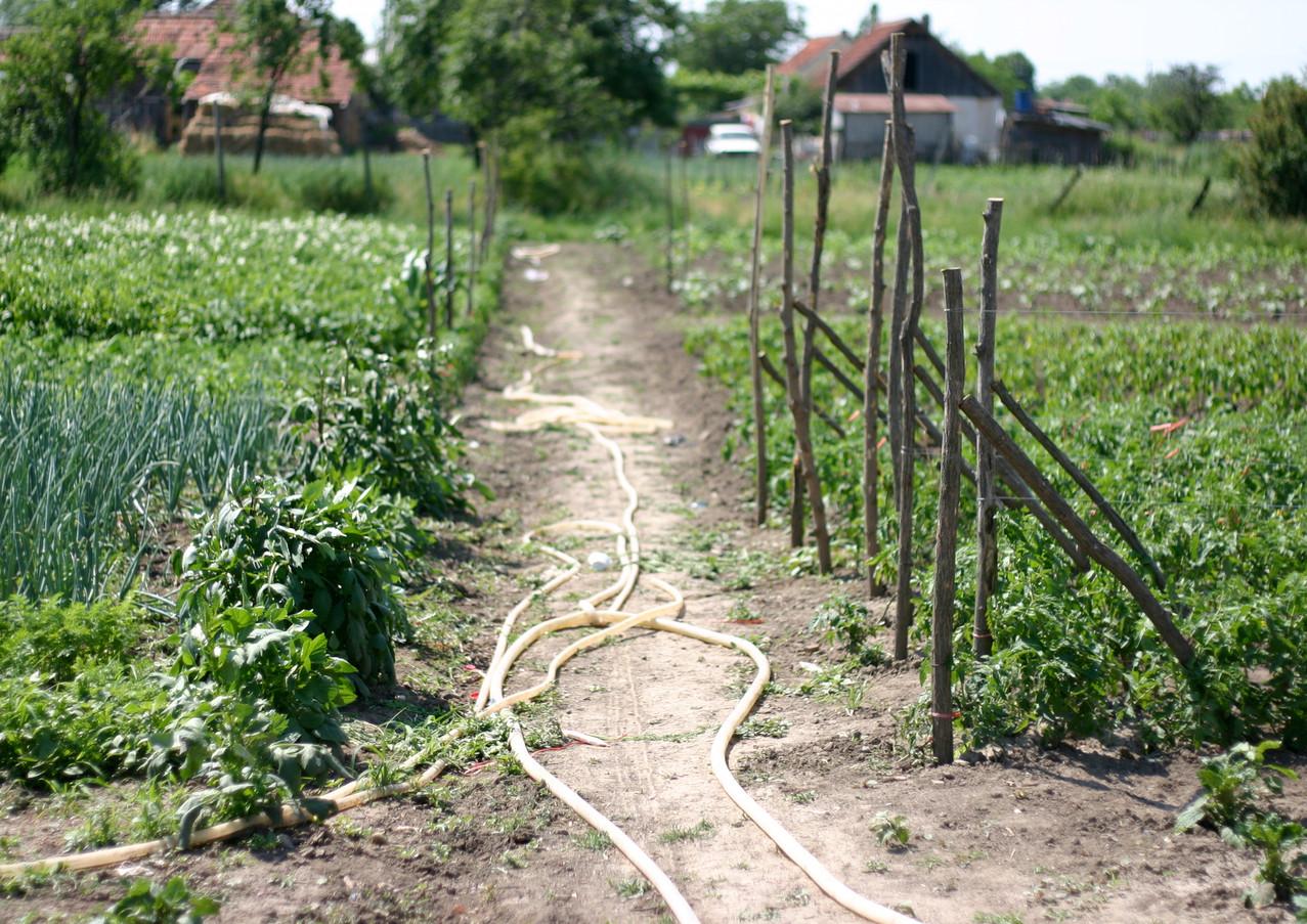 Gardening Romania