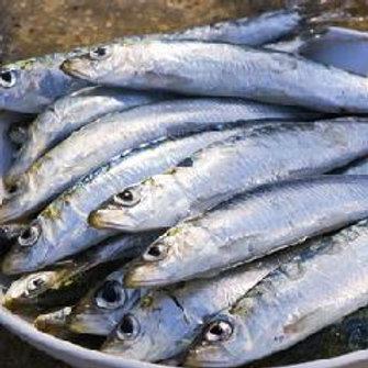 Roo, Sardines & Quinoa 3kg