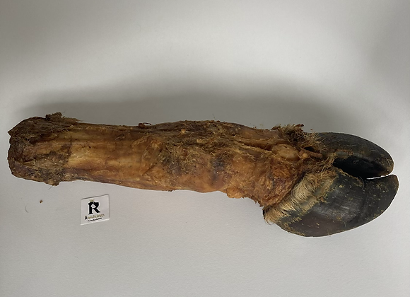 Natural GIANT Cow's Leg