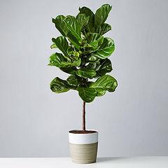 Plants.jpeg