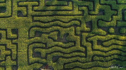 rn Maze 2.jpeg