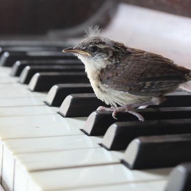 bird on piano.JPG