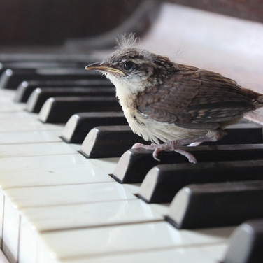 bird on piano.JPG
