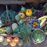 harvest33.jpg