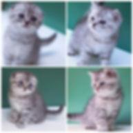 Fotoram.io (1).jpg